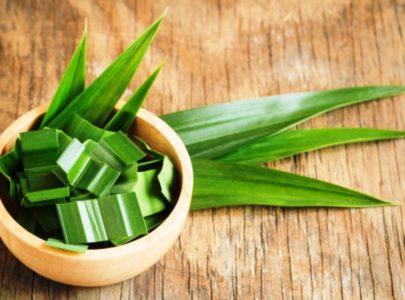 Пандан – зеленая тропическая аптека